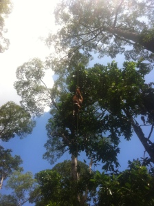 Ośrodek leczenia Orangutanów, Sepilok