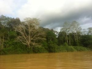 Spływ rzeką Kinabatang