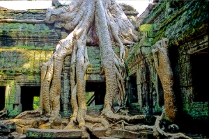 Kambodża, Angkor Ta Prom. http://theplanetd.com/cambodia-the-beautiful-angkor-wat-awaits-you/